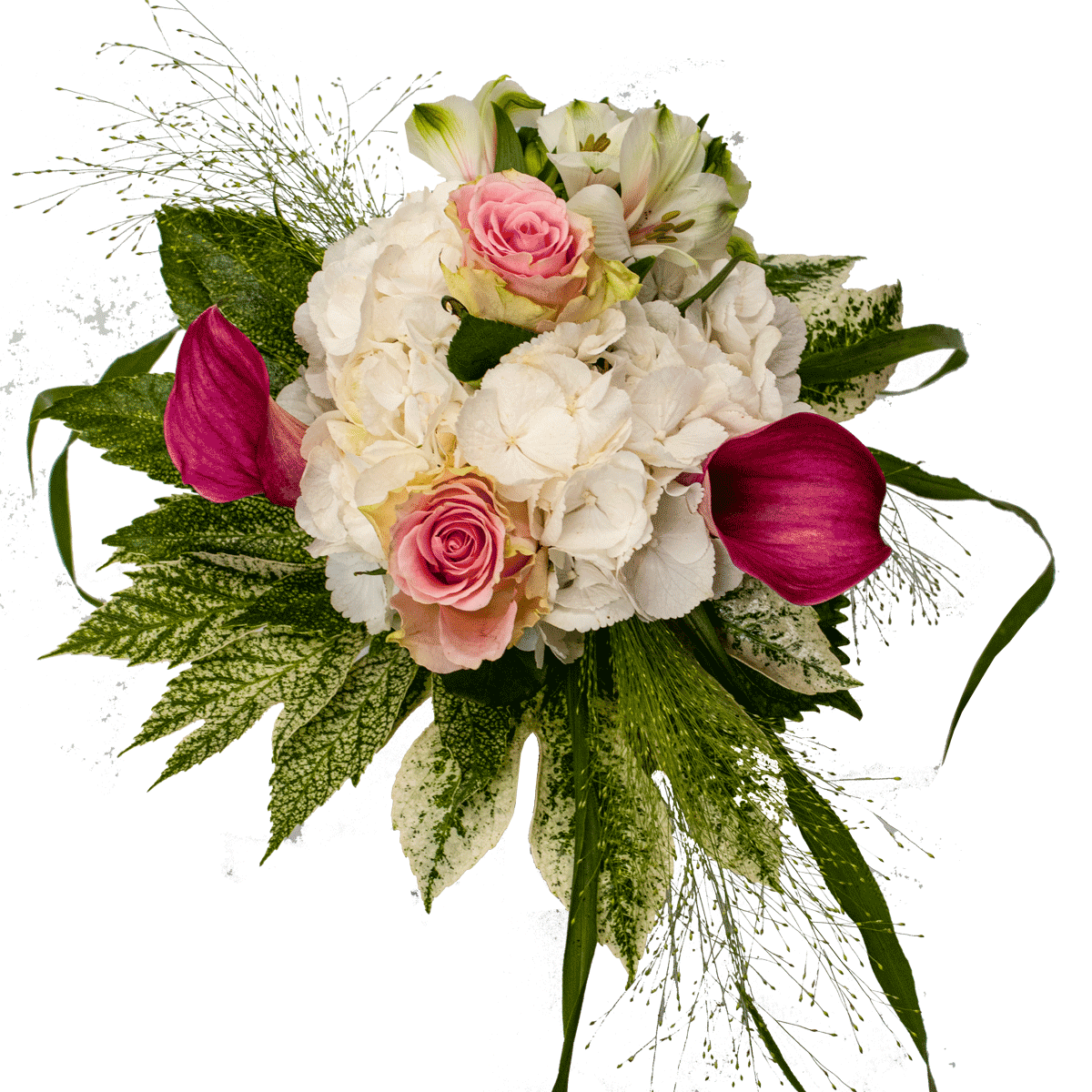 Bouquet ortensia bianca calle colorate rose rosa foglie aralia variegata e panicum