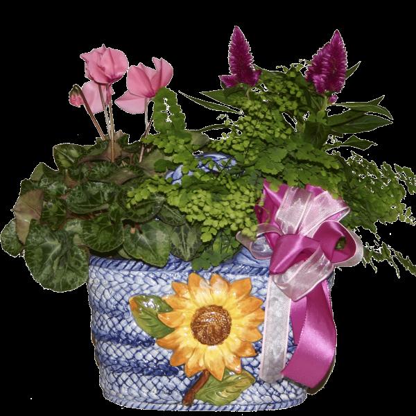 Cesto piante fiorite