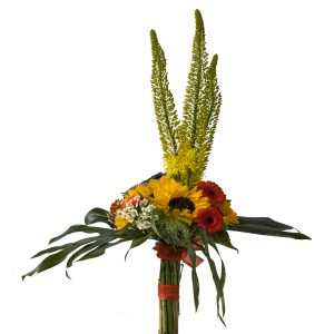 Girasoli-eremorus-gerbera-monstera
